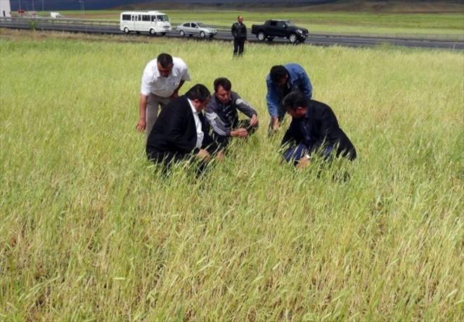 Taşpınar da üçbin dekar ekili tarlayı dolu vurdu
